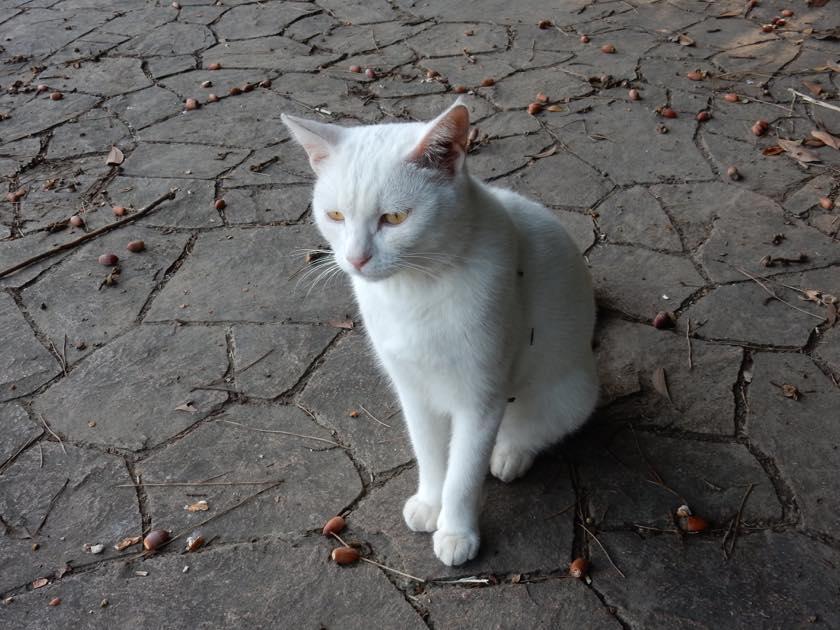 cat_20150922_19