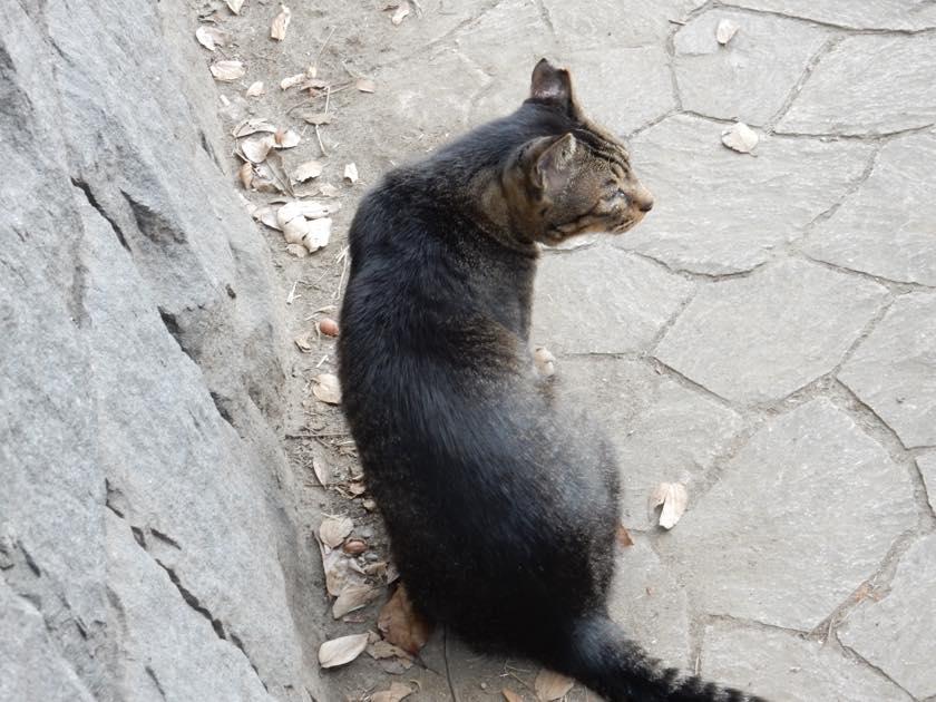cat_20150922_08