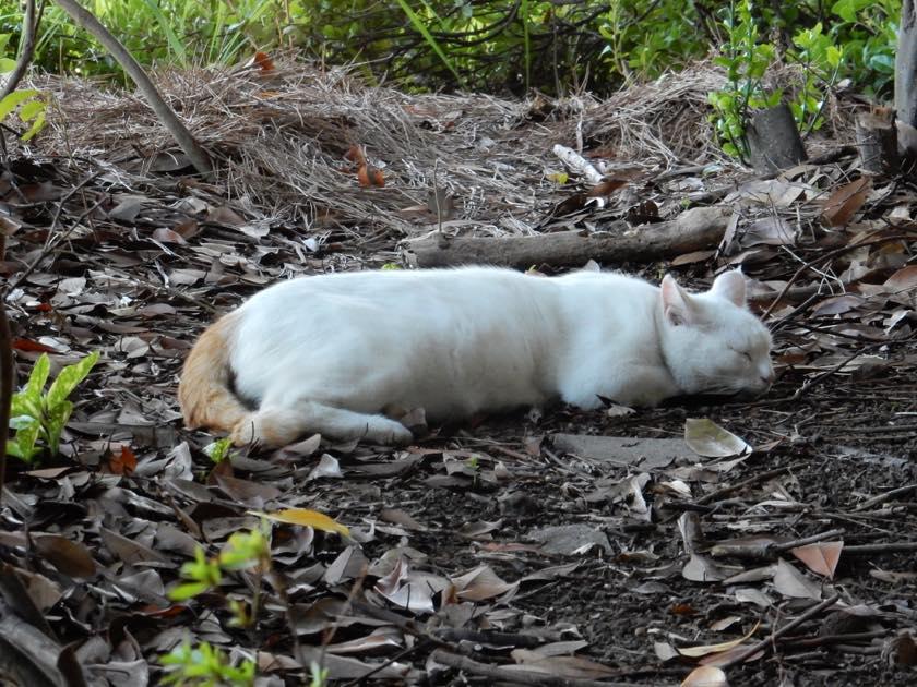 cat_20150922_16