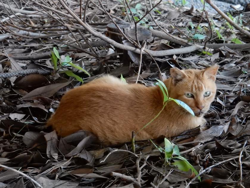 cat_20150922_02