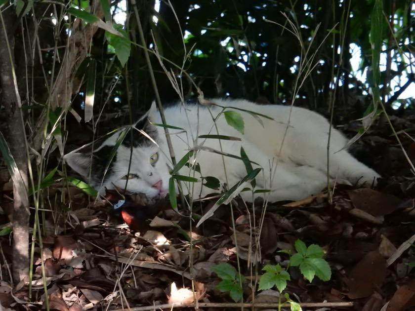 cat_20150922_06