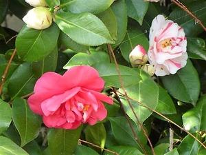 花々 (6)