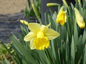 花々 (2)