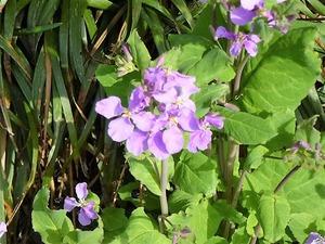 花々 (9)