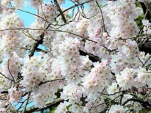 花々 (1)