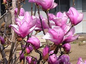 花々 (5)