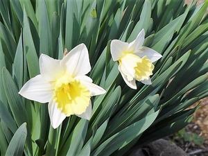 花々 (3)