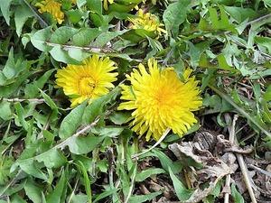 花々 (8)