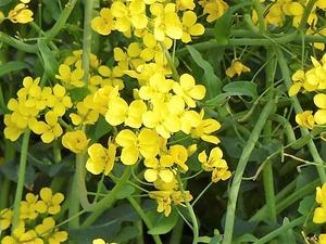 花々 (10)