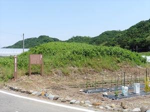 いなり塚古墳 (1)