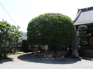 向雲寺 (8)