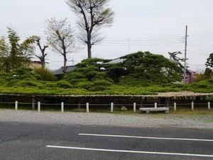 菅原神社(連取の松) (2)