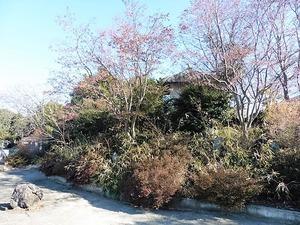 円福寺 (7)