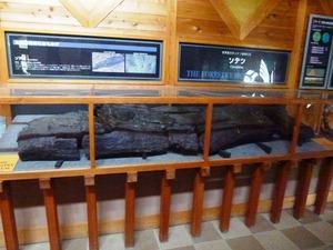 上野村森林科学館 (4)