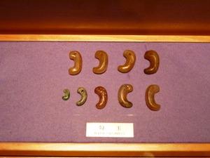 耳飾り館 (3)