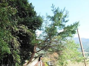 奥田白鳥神社 (2)