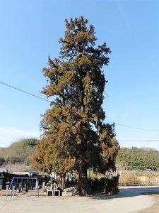 若宮八幡神社 (3)