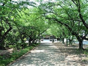 千代田町・長良神社 (3)