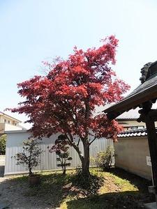 西福寺 (6)