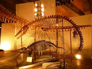 県立自然史博物館 (6)
