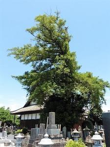 法林寺 (9)