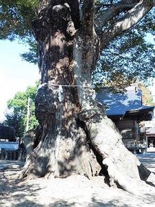 中村早尾神社 (7)