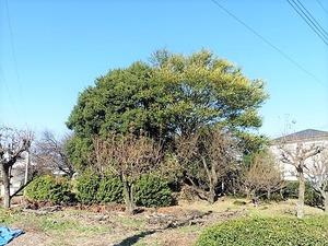稲荷塚古墳 (1)