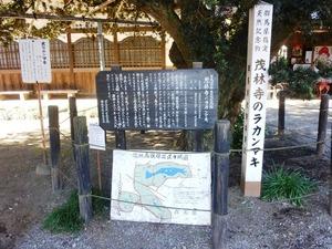 茂林寺大ラカンマキ (2)