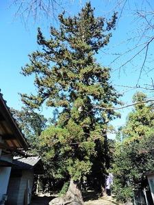 鼻毛石八幡神社 (3)