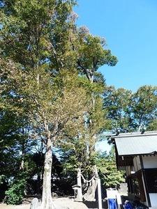 半田早尾神社 (11)