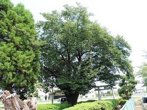 井野神社 (6)
