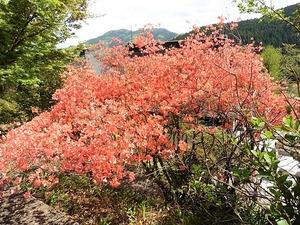 三波川金剛寺 (12)