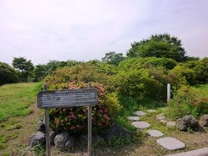 つつじが岡公園 (3)