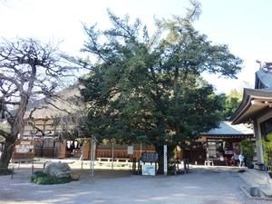 茂林寺大ラカンマキ (1)