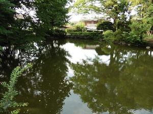 蓮池と渡月橋 (2)