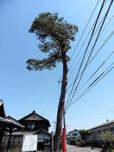 川曲諏訪神社 (8)