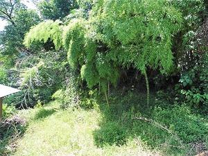 和田の館跡 (2)