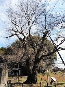 長柄神社 (5)