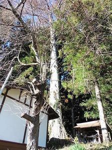 佐奈神社 (8)