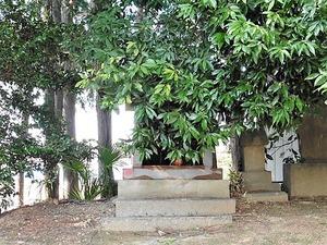 坂田長良神社 (8)