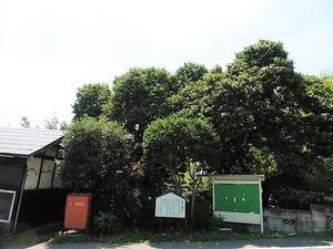 和田の館跡 (1)