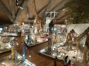 県立自然史博物館 (4)