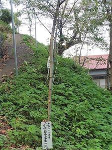 長根神社 (9)