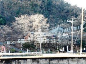 清光密寺 (4)