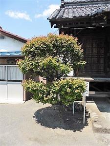 箱田菅原神社 (5)