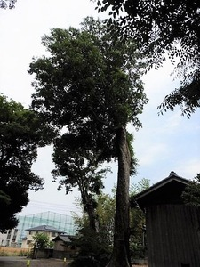 豊武神社 (12)