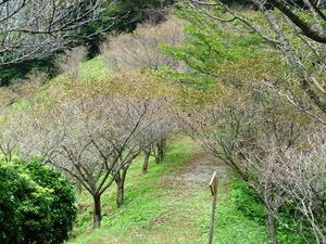 桜山公園 (7)