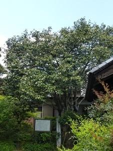 西廣寺 (4)