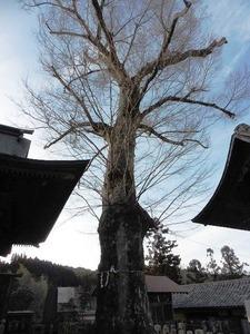 下仁田諏訪神社 (7)