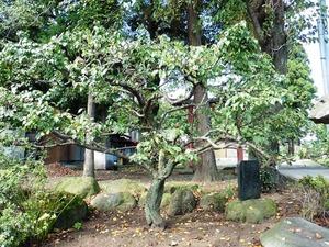 村主神社 (7)
